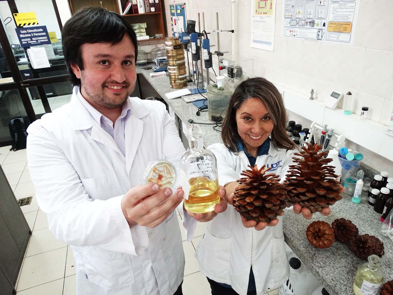 aceite-de-semilla-de-pino-el-inedito-proyecto-que-previene-la-obesidad-y-la-diabetes_39539