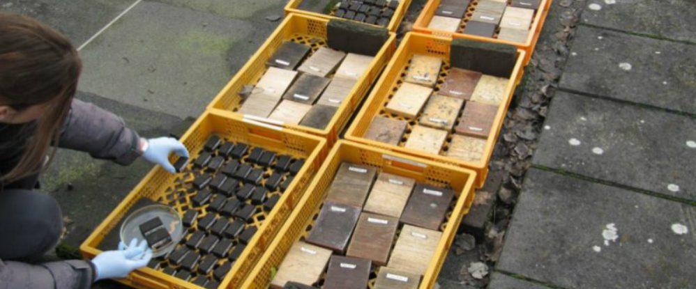 Republicacion proteccion aceite de oliva y hongos-1