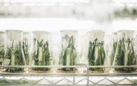 Fibras de biocarbono