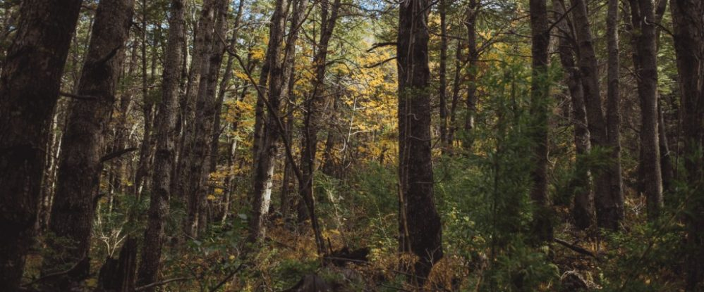 madera nativa